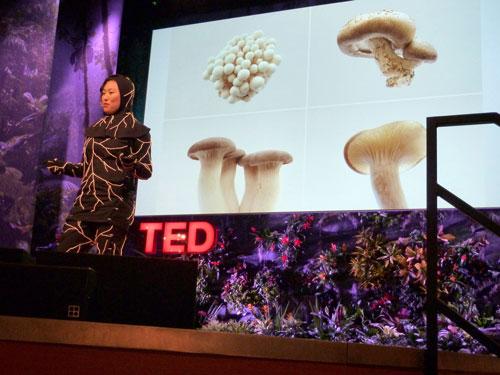 Jae Rhim Lee TED Talk
