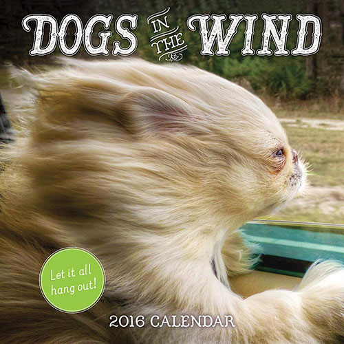 Dogs in the Wind