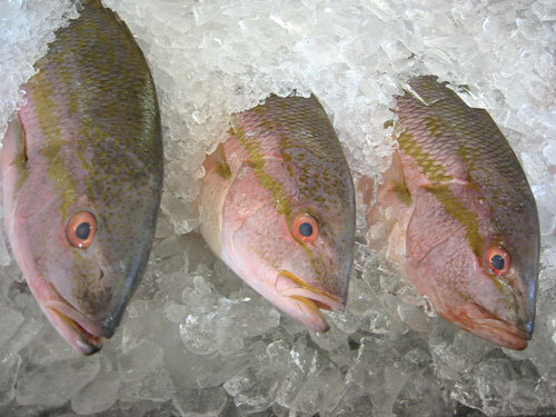 0718 fish